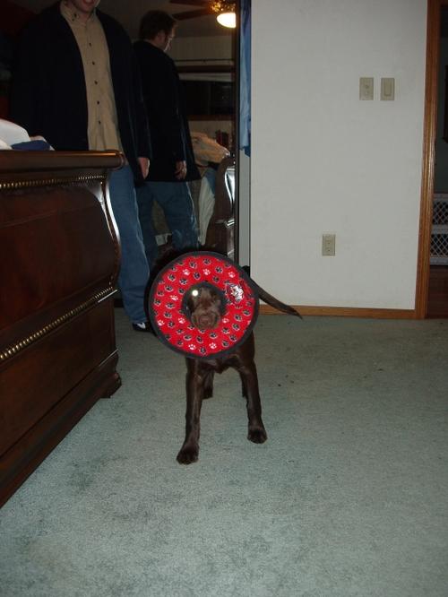 Donut_dog
